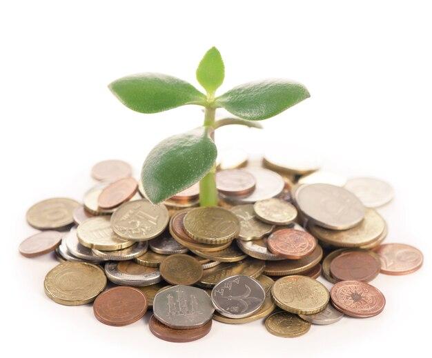 Молодой росток из кучи монет.