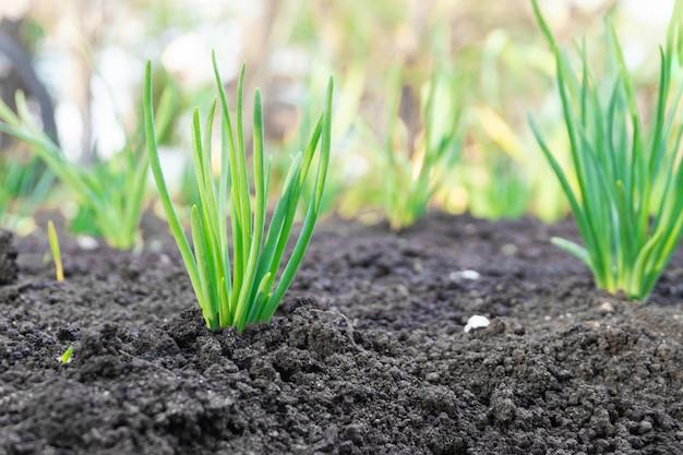 봄 날에 정원에서 젊은 새싹