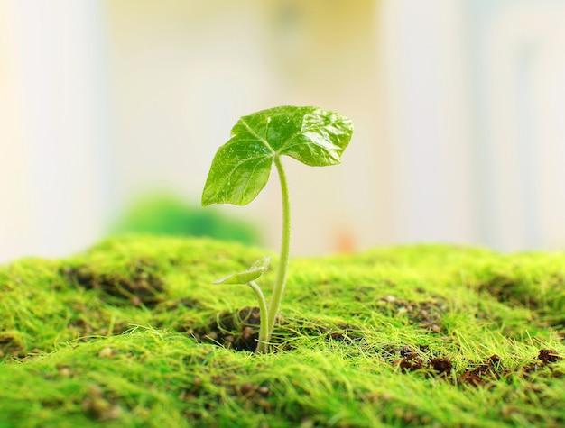 Молодой росток весной, крупным планом