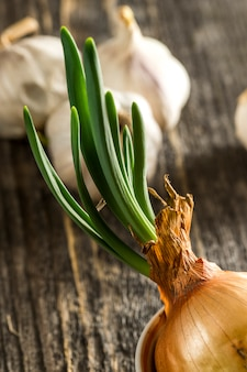Young sprouting onions on a wooden table in a saucer on the of garlic