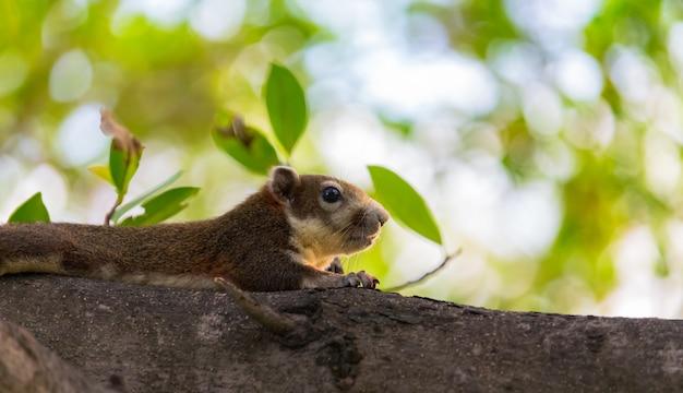 若いリスは木の上で走っています