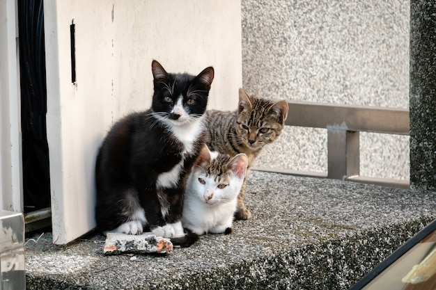 도시의 거리에서 그녀의 형제와 함께 젊은 길 잃은 고양이