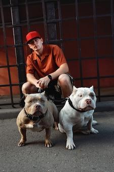 도시 거리에 두 마리의 미국 깡패 개와 함께 세련되게 옷을 입은 젊은 남자.