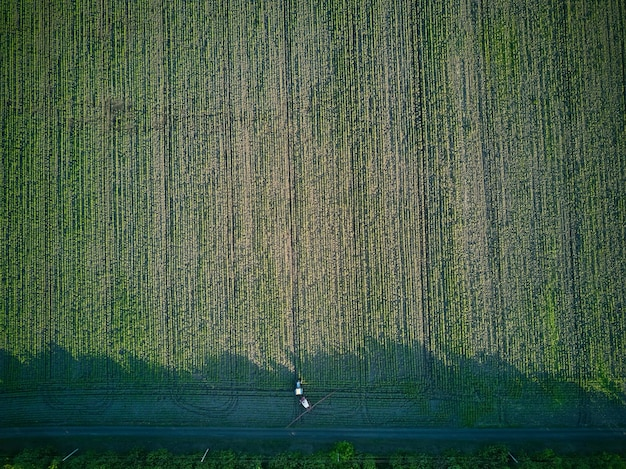 フィールドスプレーの若いヒマワリ植物、春の農業、機器付きトラクター