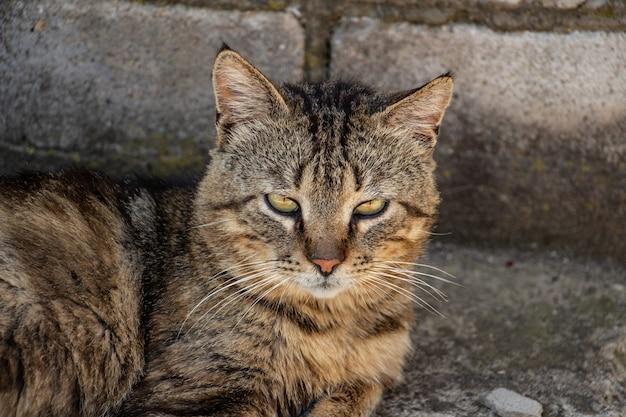 Молодой полосатый кот-боец отдыхает во дворе после тяжелого дня красивый вид