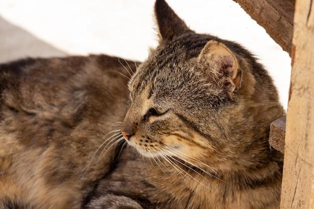 Молодой полосатый кот-боец отдыхает во дворе