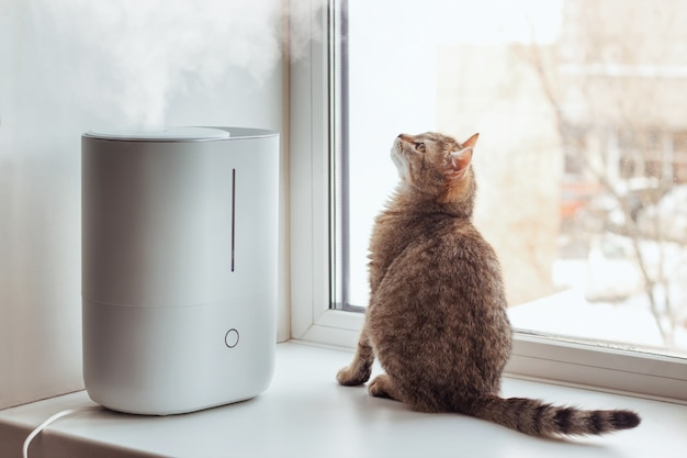 A young tabby cat sits on the windowsill and looks at the steam from the white air humidifier. cleaning device for fresh air and healthy life
