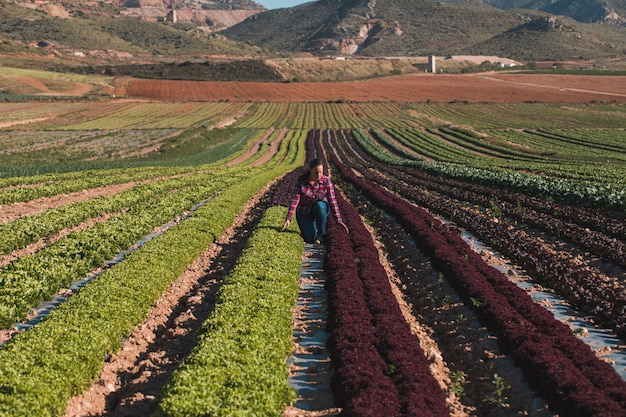 Young technical woman working in a field of lettuces