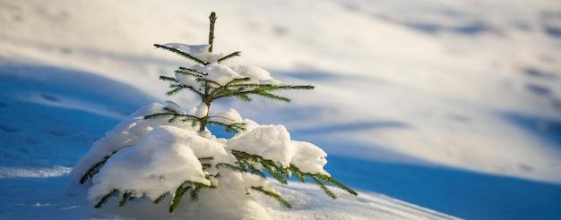 Молодая нежная ель с зелеными иголками, покрытая глубоким снегом и инеем на ярком красочном космическом фоне. поздравительная открытка с рождеством и новым годом.