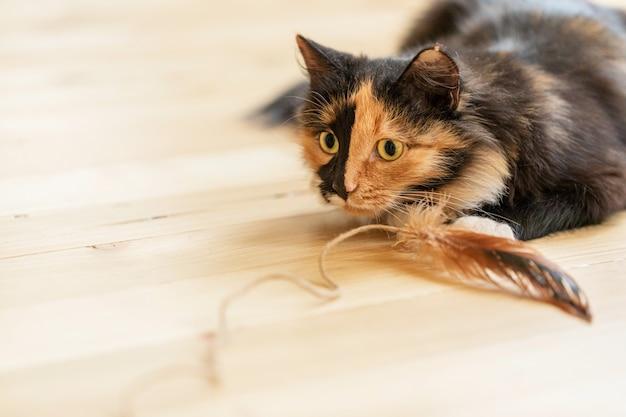 나무 바닥에 깃털을 가지고 노는 젊은 3 색 오렌지 흑백 장난 고양이. 좋아하는 애완 동물. 고양이 총구에 선택적 초점. 텍스트를위한 공간을 복사합니다.