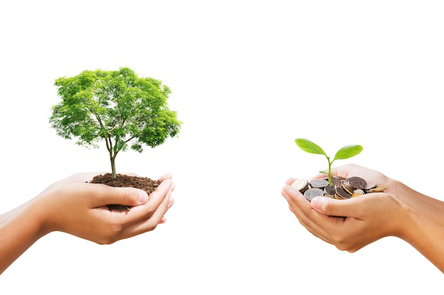 Young tree growing on pile of money in hand isolate
