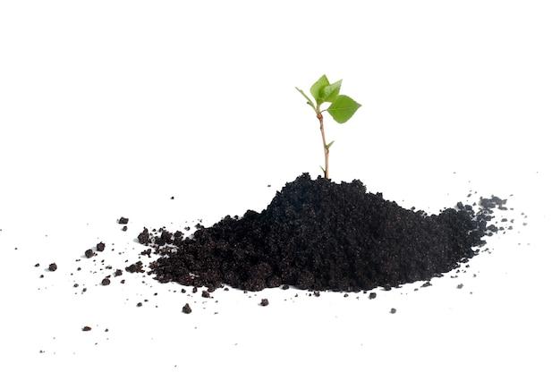土で育つ苗木苗