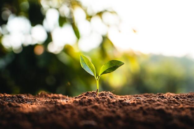자연의 토양에서 어린 나무가 자라고 있습니다.