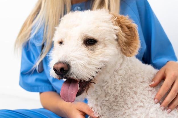床に座っている犬と若い獣医の女性