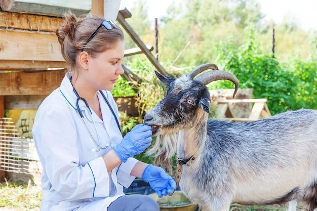 청진기를 들고 목장 배경에서 염소를 검사하는 젊은 수의사. 자연 생태 농장에서 확인하기 위해 수의사 손이 있는 어린 염소. 동물 관리 가축 생태 농업 개념입니다.