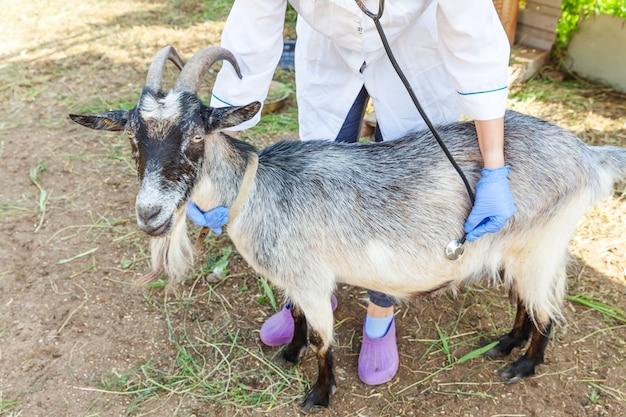 Молодая ветеринарная женщина со стетоскопом держит и исследует козу на фоне ранчо