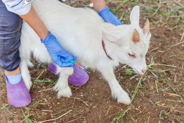 주사기를 들고 목장에 염소 아이를 주입하는 젊은 수의사 여자