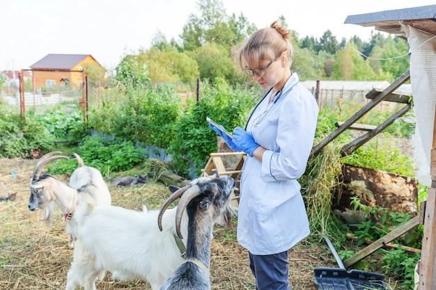 목장 배경에서 염소를 검사하는 태블릿 컴퓨터를 가진 젊은 수의사 여성. 수의사는 자연 생태 농장에서 염소를 확인합니다. 동물 보호 및 생태 축산 개념.