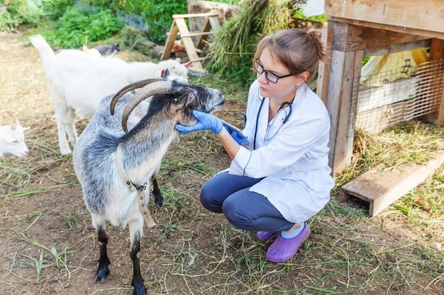 목장 배경 수의사에서 염소를 검사하는 태블릿 컴퓨터를 가진 젊은 수의사 여성...