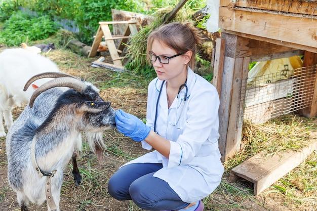 목장에서 염소를 검사하는 태블릿 컴퓨터를 가진 젊은 수의사