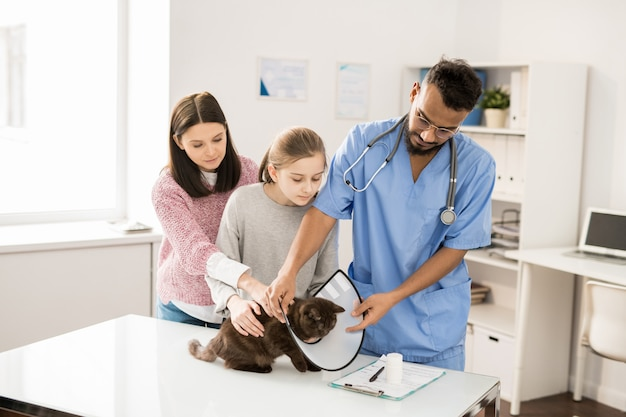 猫の首にじょうごを置く制服を着た若い獣医師が医療処置を行う前またはペットを調べる前