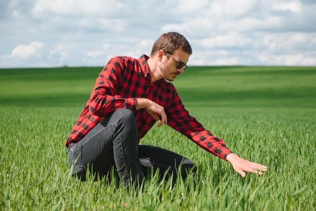 農家の手で若い小麦の芽。農家は畑で若い小麦を考えています。農業ビジネスのコンセプト
