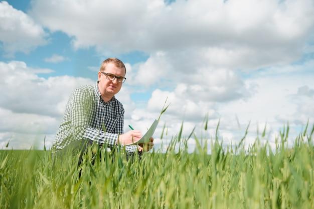 農家の手で若い小麦の芽。農家はフィールドで若い小麦を検討します