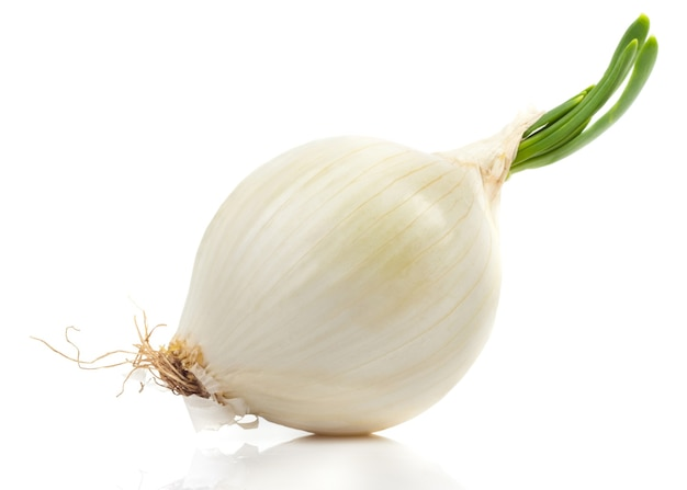 Young white onion on a white background