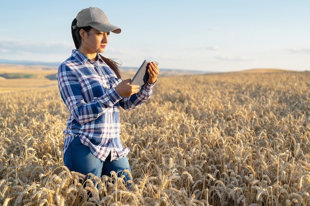 Young woman agronomist checks growth of wheat in field farmer takes notes on tablet agro business co...