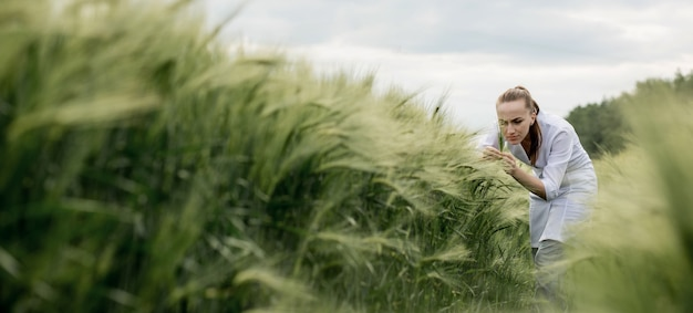 Young woman agronomist in white coat squatting in green wheat field and checking crop quality
