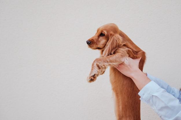 かわいいコッカー犬を保持している通りで若い女性。ペットと一緒にアウトドアライフスタイル