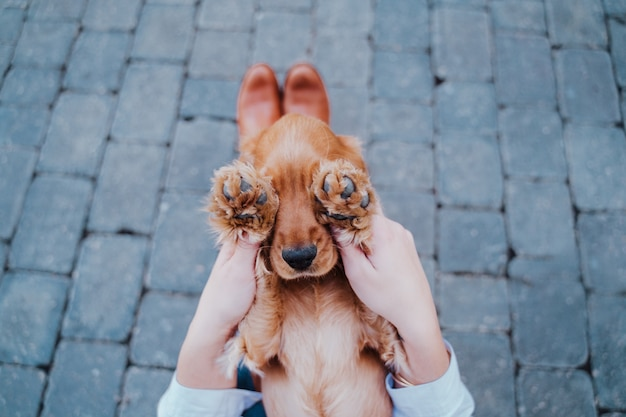 Молодая женщина на улице, играя со своей милой собакой кокер образ жизни на природе с домашними животными