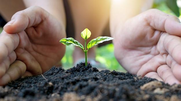 土に木を植えるために彼女の手を使用するためにかがむ若い女性