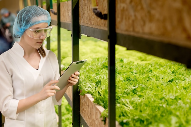 Young woman biotechnologist using tablet to check quality and quantity of vegetable in hydroponic farm. using technology to reduce working time and more comfortable.