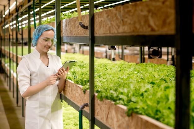 Молодая женщина-биотехнолог с помощью планшета для проверки качества и количества овощей на гидропонной ферме.