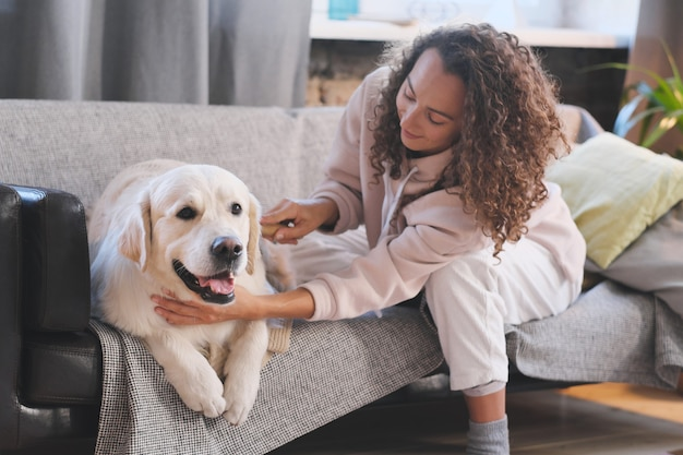 若い女性は、リビングルームのソファで毛皮をとかす犬の世話をします