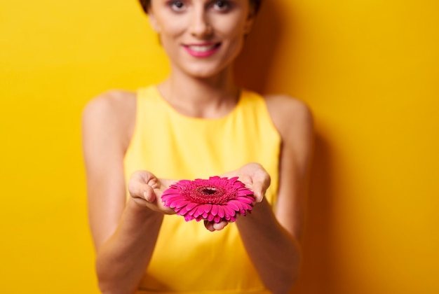 Young woman cupping gerbera daisy