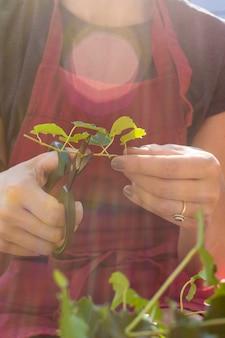 Молодая женщина резки частей растений крупным планом