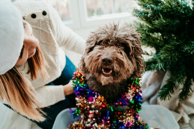 Young woman decorating her christmas tree while her cute brown dog helps her. christmas time.