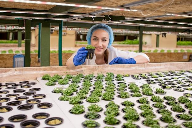 若い女性の農民の科学者は、有機養液栽培の野菜畑に関する研究を分析および研究しています