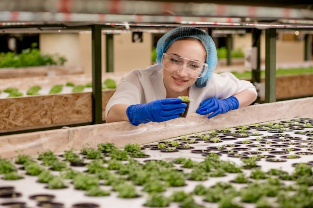 Young woman farmer scientist analyzes and studies research on organic, hydroponic vegetable plots - caucasian woman observes about growing organic vegetables and health food.