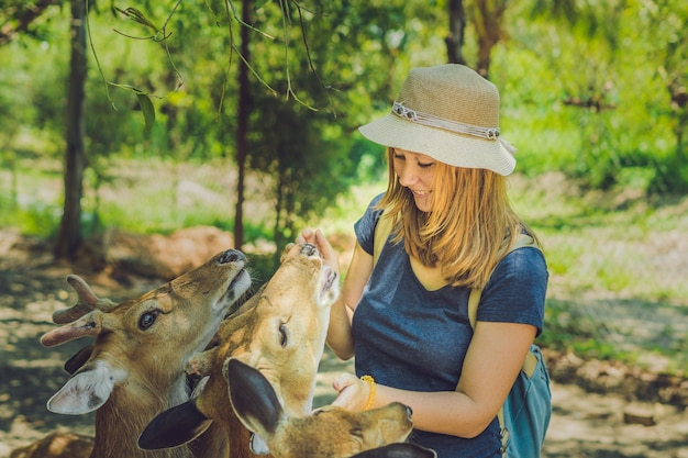 Young woman feeding beautiful deer from hands in a tropical zoo.