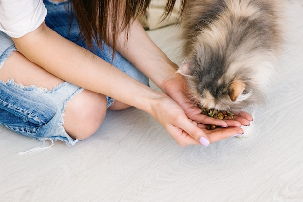 Young woman feeds her lovely cat from hands. charming family pets and people's tendance them