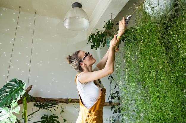 オレンジ色のオーバーオールの若い女性庭師は、ハサミを使用して緑豊かなアスパラガスシダ観葉植物から乾燥した枝をトリミングし、計画された剪定を行います。自宅の緑。植物への愛。屋内の居心地の良い庭。