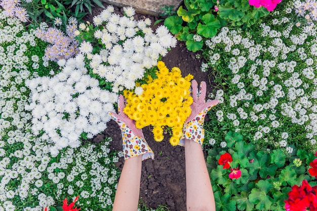 Young woman gardener planting flowers in the garden. people, gardening, planting of flowers, hobby concept