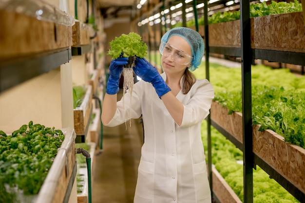 水耕栽培農場からサラダを収穫する若い女性。有機野菜と健康食品を育てるというコンセプト。水耕栽培野菜畑。