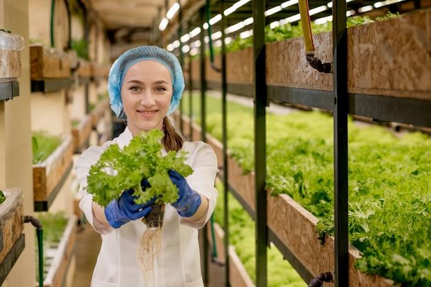 水耕栽培農場からサラダを収穫する若い女性。有機野菜と健康食品を育てるというコンセプト。水耕栽培の野菜畑。