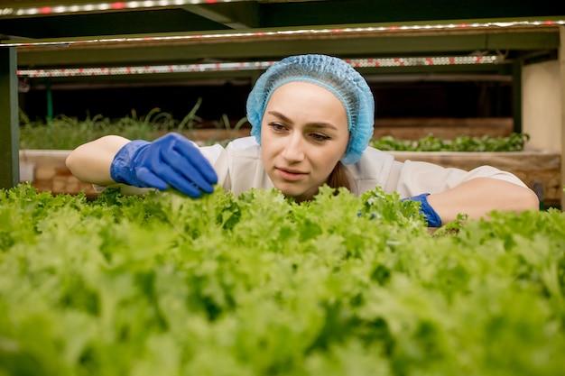 수경법 농장에서 샐러드를 수확하는 젊은 여자. 유기농 야채와 건강 식품 성장의 개념.
