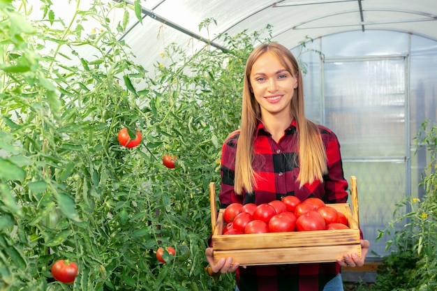 有機農場でトマトを収穫する若い女性