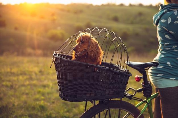 Giovane donna che si diverte vicino al parco di campagna, andare in bicicletta, viaggiare al giorno di primavera